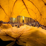 اموزش عکاسی در فصل پاییز
